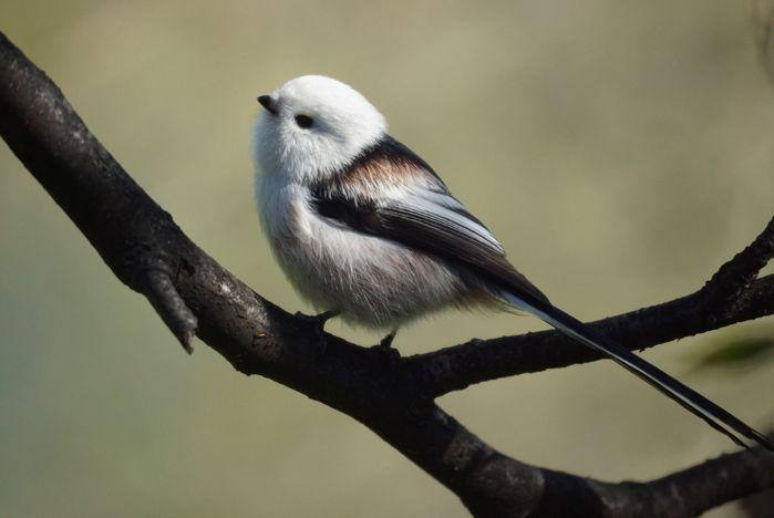 Дендропарк ВГУЭС – место обитания лесных птиц