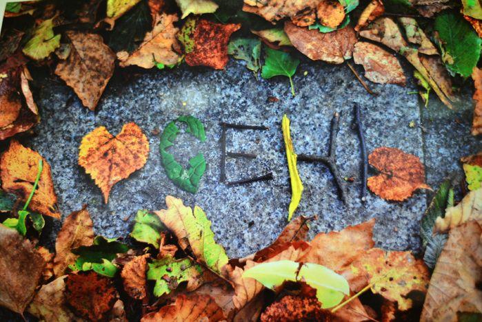 «Безумную осень» представили во ВГУЭС