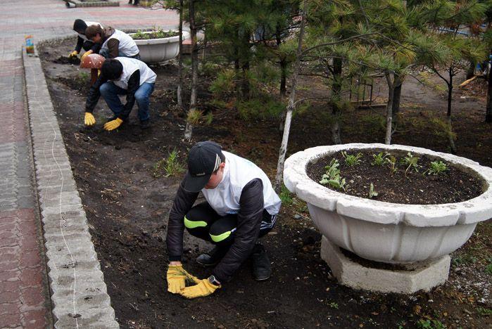 В день рождения Центра волонтеров во ВГУЭС заложена «Волонтерская аллея»