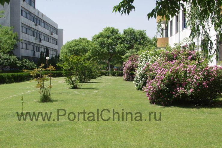 Изучай китайский язык на берегу Жёлтого моря