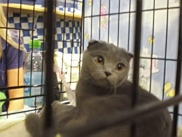 На выставке кошек в ТКК «Андеграунд» был кот по имени Черчилль