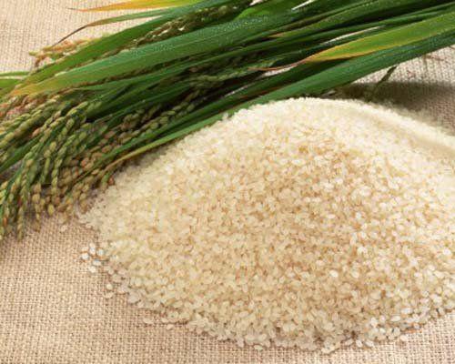 К вопросу о привлечении инвестиционных средств для возрождения рисоводства в Приморском крае