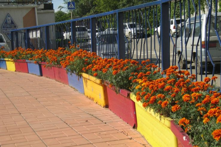 Студенты ВГУЭС облагораживают университетский парк