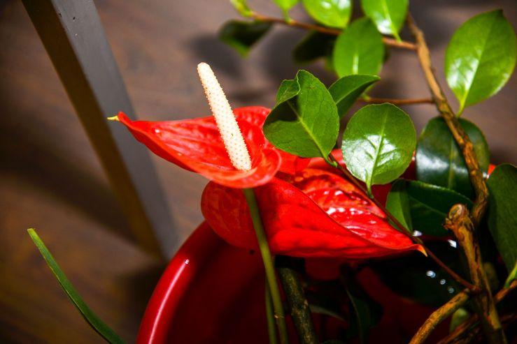 Искусство икебаны создаёт во ВГУЭС летнее настроение