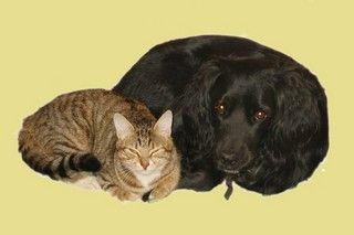 На выставке бездомных животных во ВГУЭС каждый сможет выбрать себе четвероногого друга